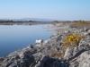 Dringeen  Bay
